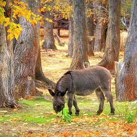 Donkey in the Autumn Cottonwoods by Donna Kennedy