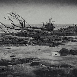 Doom and Gloom by Andrew Wilson