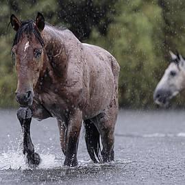 Downpour. by Paul Martin