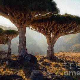 Dragon Blood Tree by Jerzy Czyz
