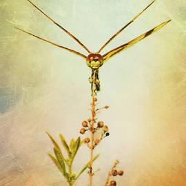 Dragonfly by Carolyn Hutchins