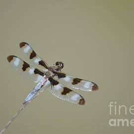 Dragonfly by Chris Bartley