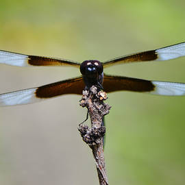 Dragonfly Close Up and Personal by Gaby Ethington