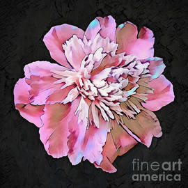 Drama Queen Peony flower, floral in dreamy colors by Tina Lavoie