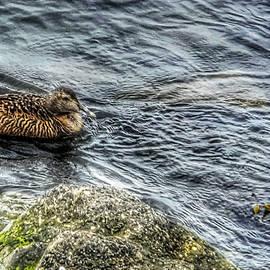 Dramatic duck by Reykholt ArtFabrik
