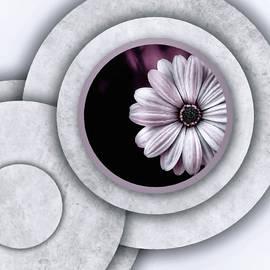 Dream Daisy by Susan Maxwell Schmidt