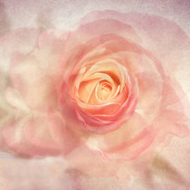 Dream Of A Rose by Claudia Moeckel