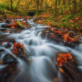 Dreaming of Fall by Darren White