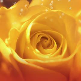 Dreamy Golden Rose And Stars 3 by Johanna Hurmerinta