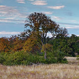 Dreamy Prairie with Fall Foliage at Canyon Lake - Comal County Texas Hill Country by Silvio Ligutti