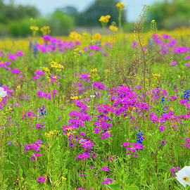 Dreamy Texas Wildflowers by Lynn Bauer