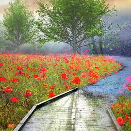Dreamy Walk in Poppies II by Debra and Dave Vanderlaan