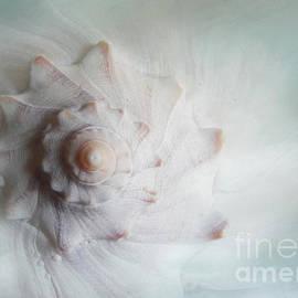 Dreamy Whelk by Kelley Freel-Ebner