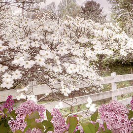 Dressed in White and Soft Pink by Debra and Dave Vanderlaan