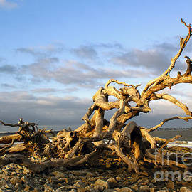 Driftwood Beach Afternoon on Jekyll Island by Sea Change Vibes