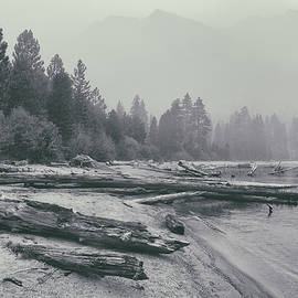 Driftwood Beach by Louis Amore