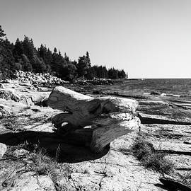 Driftwood on the rocks by Benjamin Roberts