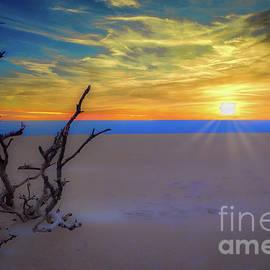 Driftwood Sunrise by Dan Carmichael