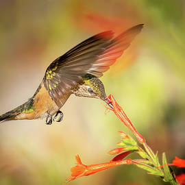 Drinking Nectar is a Meditative Experience by Judi Dressler