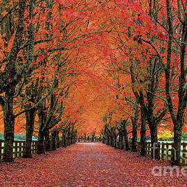 Driveway Lined by Trees with Autumn Foliage in Washington State by Tom Schwabel