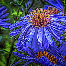 Droplets on aster #l4 by Leif Sohlman