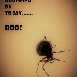 Dropping By To Say Boo by Angela Davies