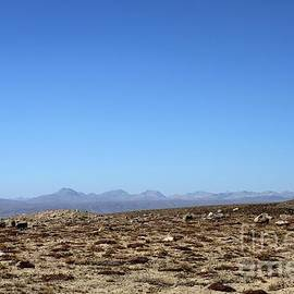 Dry burnt grass and shrubs in Deosai Plains landscape Skardu Pakistan by Imran Ahmed