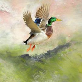 Duck Duck Go by Donna Kennedy