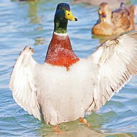 Duck Hug by Shoal Hollingsworth