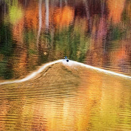Duck in Colorful Autumn Water by Francis Sullivan