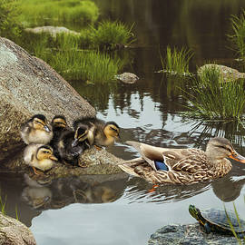 Duck Pond by Spadecaller