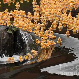 Duck Race by J Lloyd