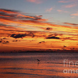 Duck Taking Off at Sunrise by Catherine Sherman