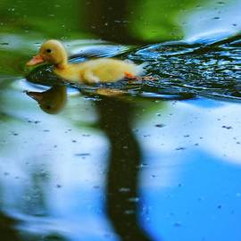 Duckling by Mary Machare
