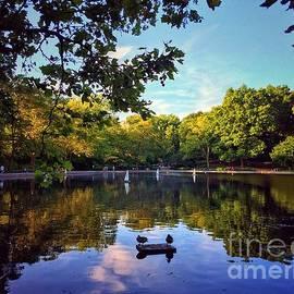 Ducks at the Pond by Miriam Danar