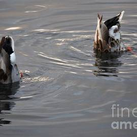 Ducks Bottoms Up in Big Lake City Park New Orleans by Michael Hoard