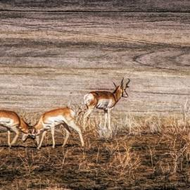Duel For Dominance ... by Judy Foote-Belleci