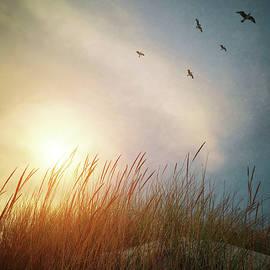 Dune and Birds by Carlos Caetano