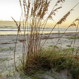 Dune Grass by Ralph Staples