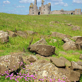 Dunstanburgh Castle with Sea Thrift foreground, Northumberland, England by Neale And Judith Clark