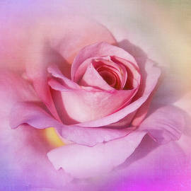 Dusty Pink Rose by Terry Davis