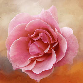 Dusty Rose Floating by Terry Davis