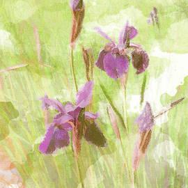 Dutch Iris Mauve by Larry J Bishop