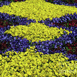 Dutch Spring Pattern by Peter Horrocks