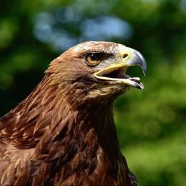 Eagle Eye by Neil R Finlay