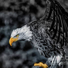 Eagle Eye by RC- Photography LLC
