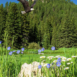 Eagle Flight over Wildflowers by Patti Deters