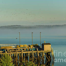 Eagle Flying Over the Dock by Alana Ranney