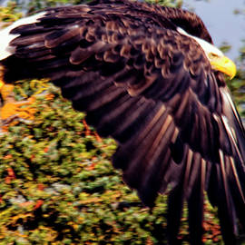 Eagle Flying Over Trees