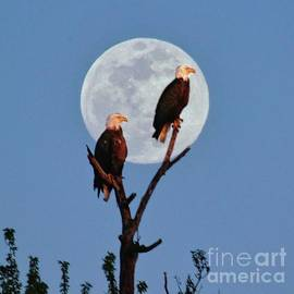Eagle Moon